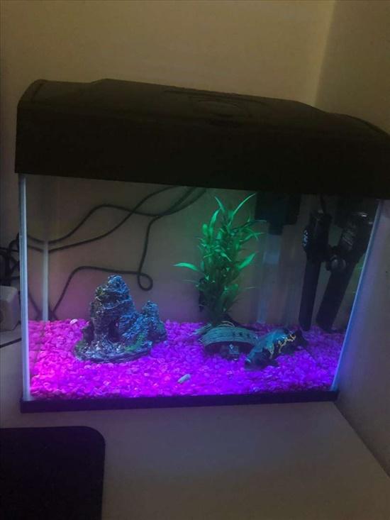 אקווריום דגים - אקוואריום