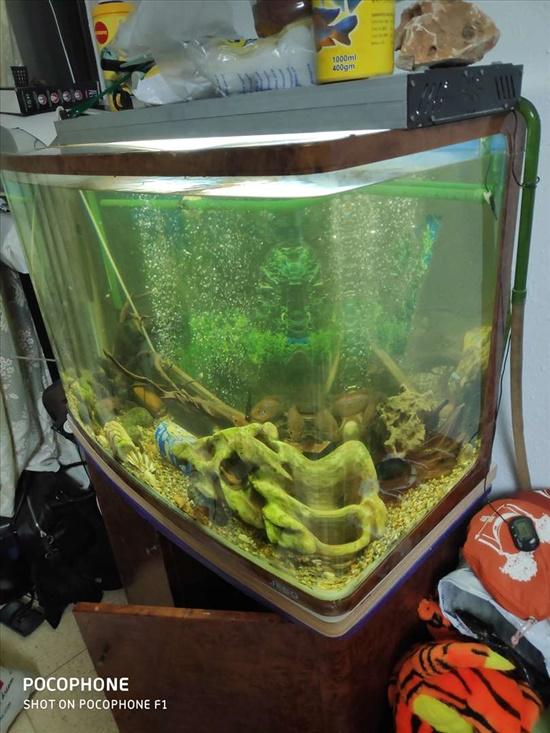 אקווריום פנורמי 250 ליטר דגים - אקוואריום