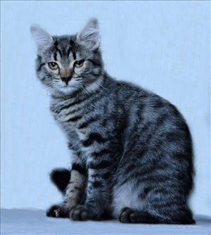 חתולים אחר טבריה והצפון