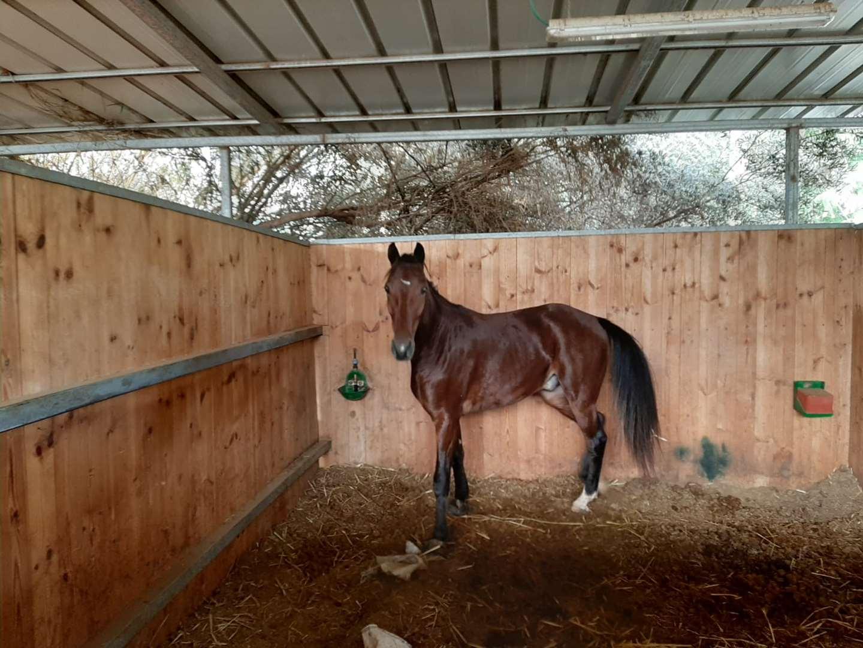 סוסים - כללי