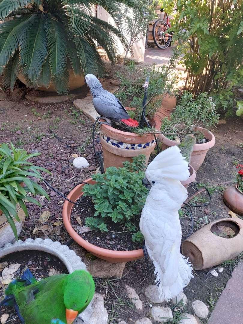 ציפורים - אחר