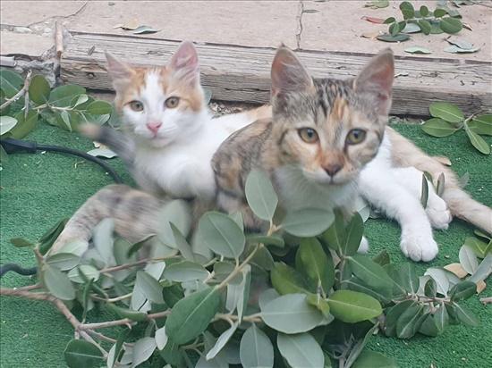 נני וג'וני