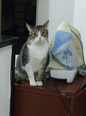 חתולים אחר חדרה והסביבה