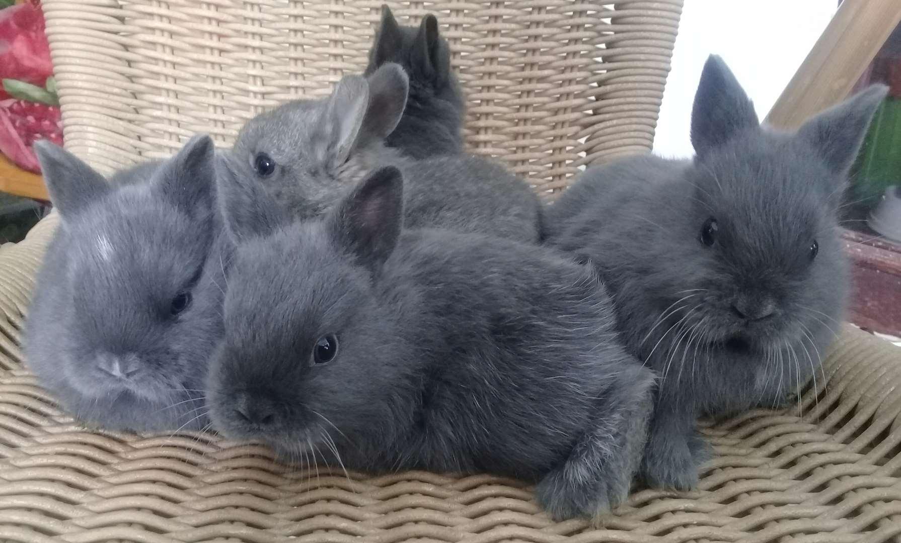 מכרסמים ארנבות