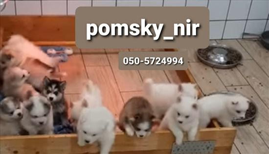 פומסקי