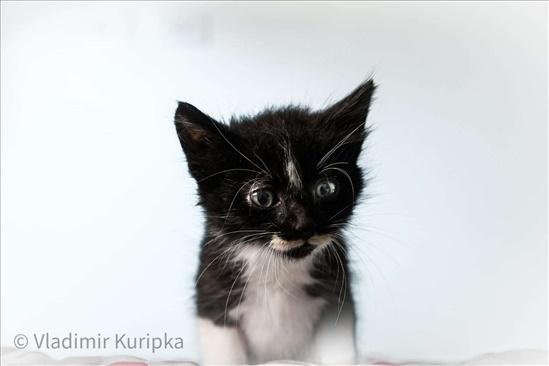 גור שחור לבן מקסים חתולים - אחר