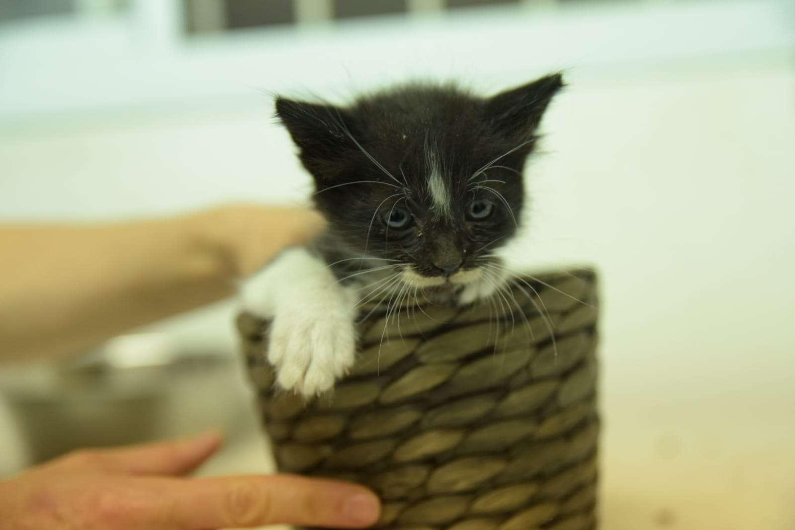 חתולים אחר חיפה והקריות