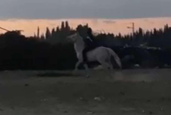 סוסים קווטר חדרה והסביבה