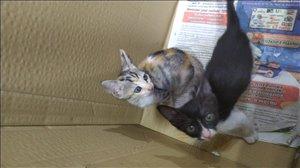 חתולים מעורב