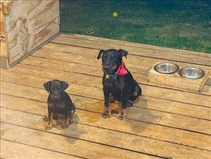 כלבים אחר טבריה והצפון