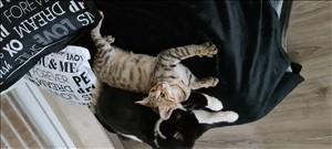 חתולים כללי אשדוד והסביבה