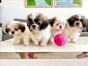 כלבים שי צו תל אביב והמרכז