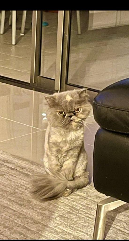 לולה חתולים - כללי
