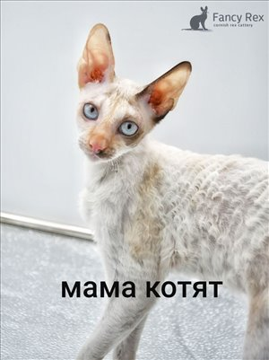 חתולים אחר