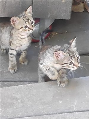 חתולים כללי טבריה והצפון