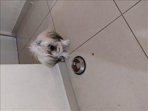 כלבים שי צו מודיעין והסביבה