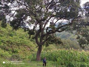 להשכרה 5 חדרים ב אקוודור דרום אמריקה - וילקבמבה