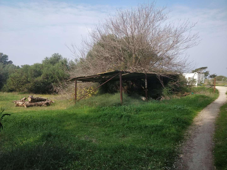 משק חקלאי למכירה 1 חדרים בבורגתה דרך הארז