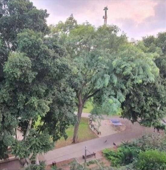 דירת גן למכירה 4 חדרים ברמת גן סמטת  יפתח 8 תל גנים
