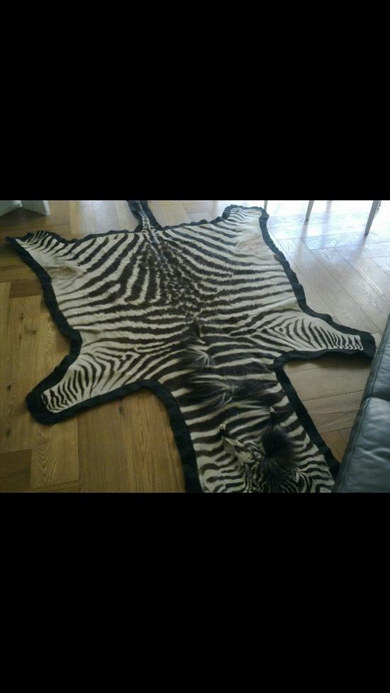שטיח זברה