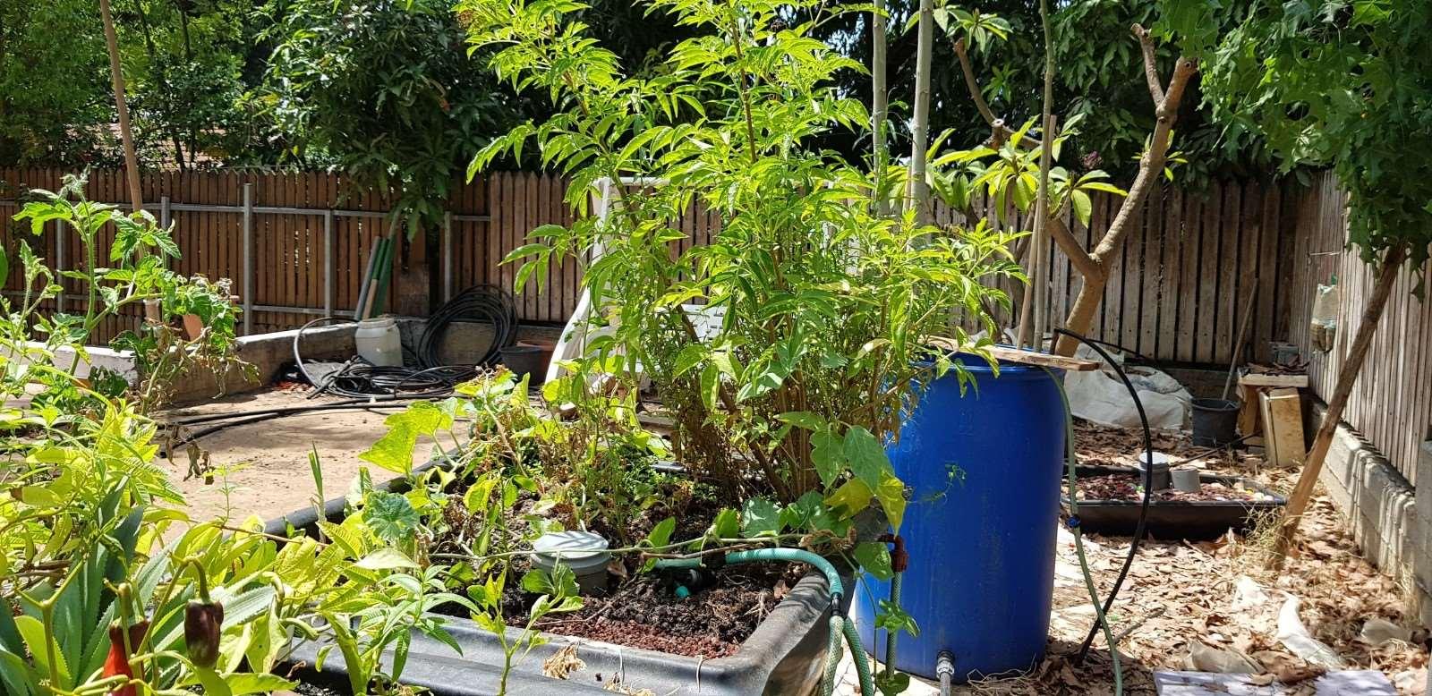 לגינה - שונות