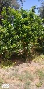 לגינה עצים ועציצים 6
